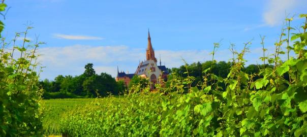 Weinberge mit Blick auf die Rochuskapelle Bingen