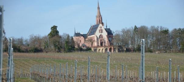 Rochuskapelle_Rebschnitt